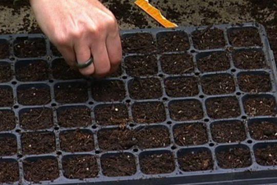 آموزش کاشتن بذر کاکتوس و ساکولنت