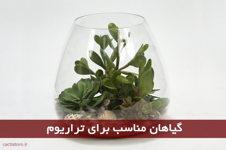 گیاهان مناسب برای تراریوم