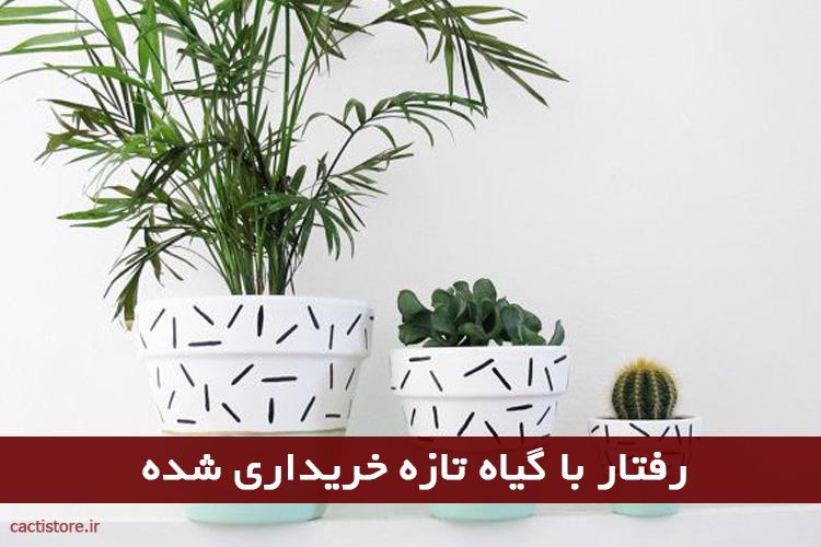 رفتار با گیاه تازه خریداری شده
