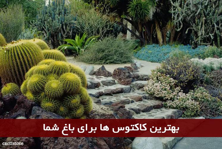 بهترین کاکتوس ها برای باغ شما