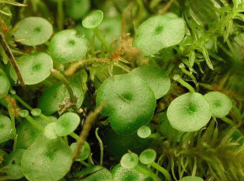 معرفی گیاهان حساس (قسمت اول)