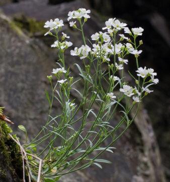 معرفی گیاهان حساس (قسمت دوم)