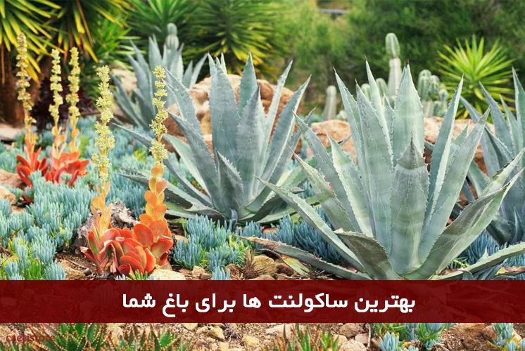 بهترین ساکولنت ها برای باغ شما