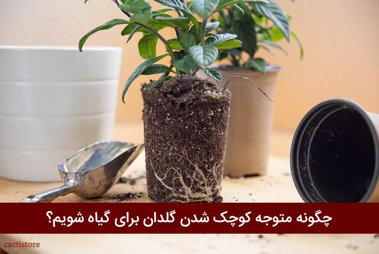 چگونه متوجه کوچک بودن گلدان برای گیاه شویم؟