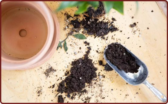 چگونه متوجه کوچک شدن گلدان برای گیاه شویم؟