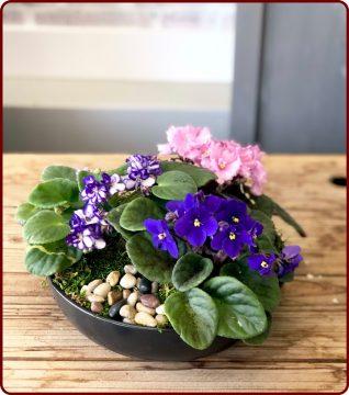 گیاهان مناسب برای آشپزخانه - قسمت دوم