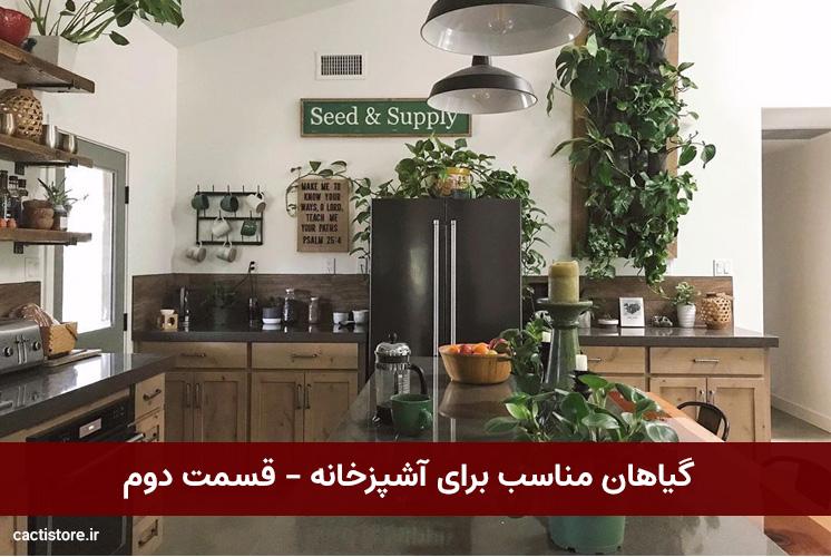 گیاهان مناسب برای آشپزخانه – قسمت دوم