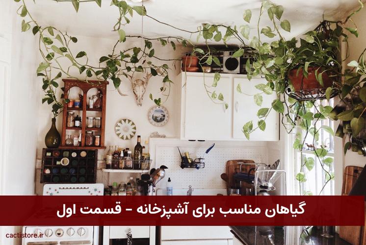گیاهان مناسب برای آشپزخانه – قسمت اول
