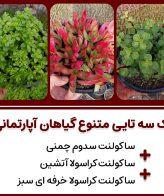 پک گیاهان آپارتمانی متنوع 3 عددی