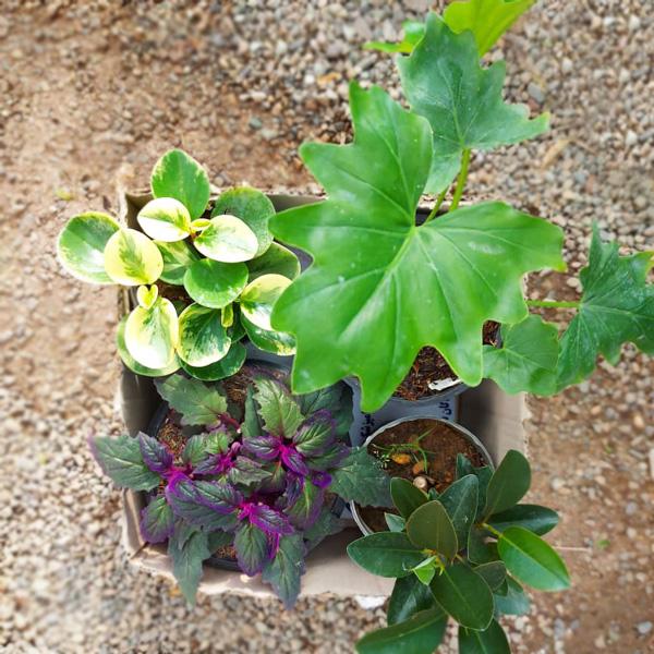 پک گیاهان آپارتمانی متنوع