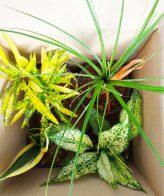 پک گیاهان آپارتمانی زینتی