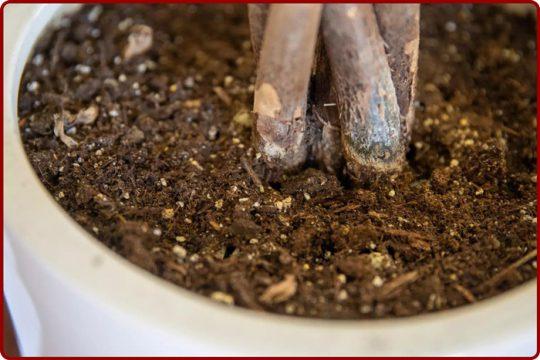 تقویت خاک گلدان گیاهان