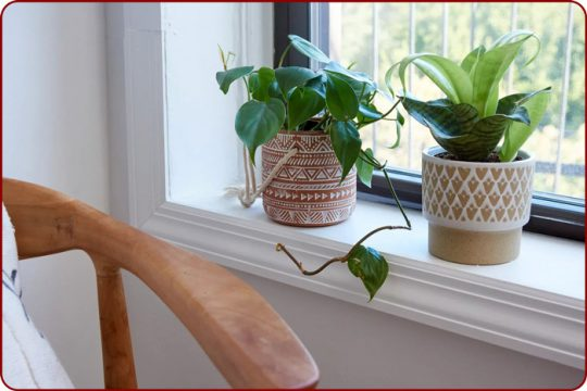 نکات مهم مراقبت از گیاهان خانگی در زمستان