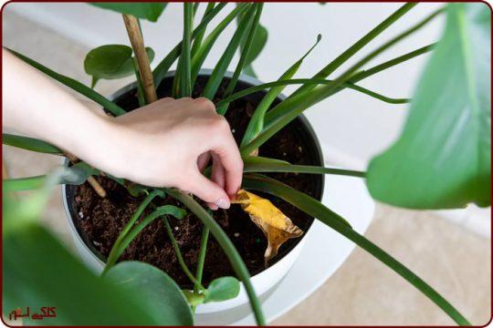چرا باید برگ گیاهان را تمیز کنیم