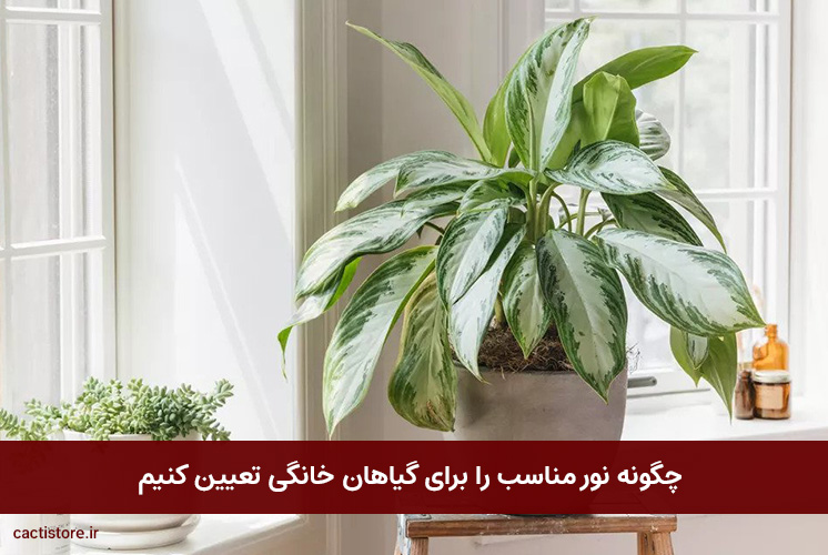چگونه نور مناسب را برای گیاهان خانگی تعیین کنیم