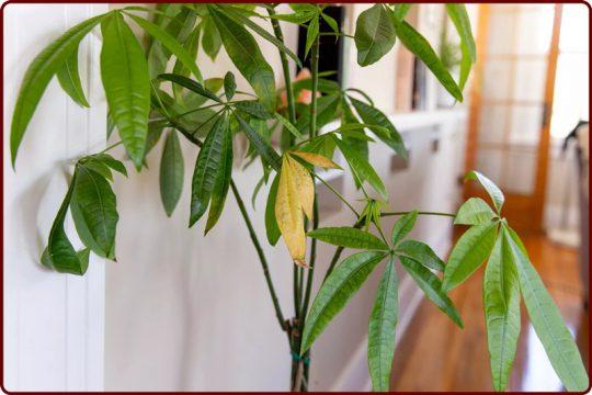دلایل زرد شدن برگ گیاهان