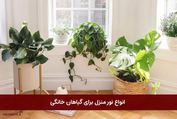 انواع نور منزل برای گیاهان خانگی