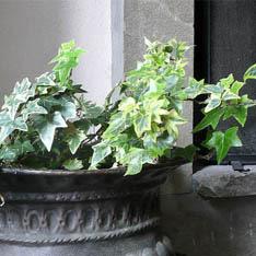 جدول آبیاری گیاهان آپارتمانی