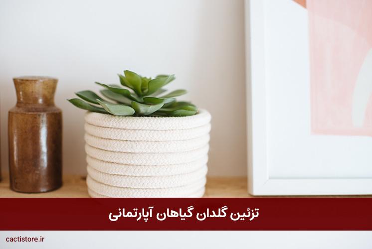 تزئین گلدان گیاهان آپارتمانی